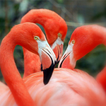 dubious flamingos small.jpg
