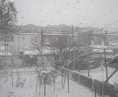 noreaster-backyard-2w.jpg